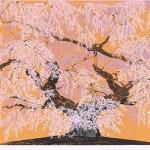 般若院枝垂桜絢爛