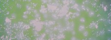 木漏れ日green-31